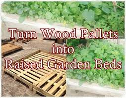 wood pallets into raised garden beds