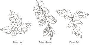 poison ivy poison oak and poison