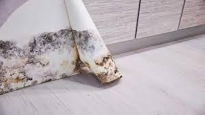 Mold Testing | Mold Inspection Company Near Me in Berlin, Maryland ...