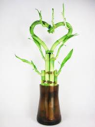 live heart shape 6 style lucky bamboo