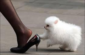 اجمل الصور المضحكة للحيوانات اضحك مع الحيوانات صوري