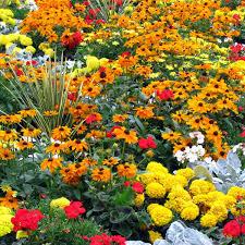 favorite flower bed ideas for full sun