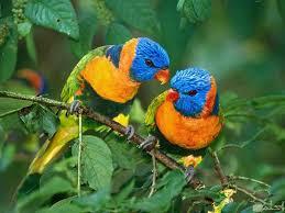 صور عصافير ملونة رائعة