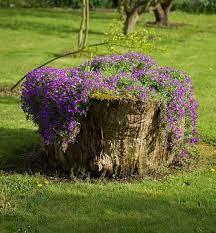 garden with tree stumps