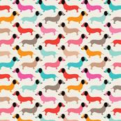 live dachshund wallpapers tmu42
