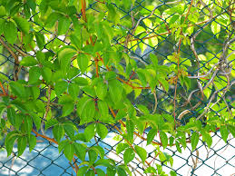 How To Prevent Vines And Shrubbery From Overtaking Your New Fence Northland Fence