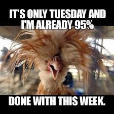 happy tuesday pictures funny