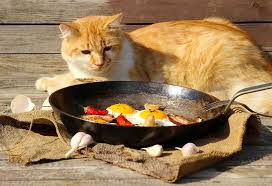 homemade cat food 8 healthy and tasty