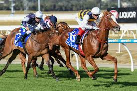Geelong Cup attracts 12 runners
