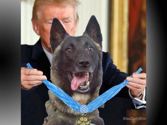 Image result for trump dog""