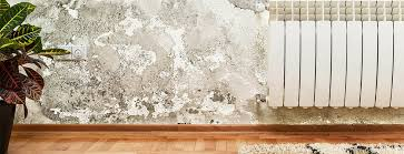 mold vs mildew when to worry and when