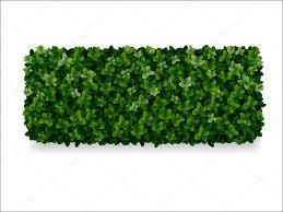 Boxwood Decorative Fence Stock Vector C Belikovand 59874397