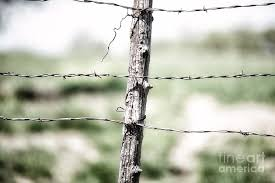 Rural America Old Wooden Rustic Fence Post With Barb Wire Located In Axtell Kansas Photograph By James Hendrix