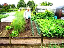 container vegetable roof garden