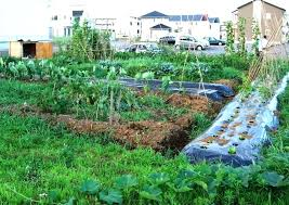 rooftop vegetable garden ideas india