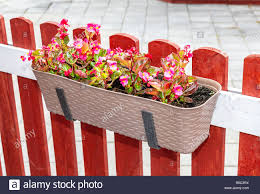 Flowers Hanging On Fence High Resolution Stock Photography And Images Alamy