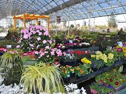 bay area specialty garden centers offer
