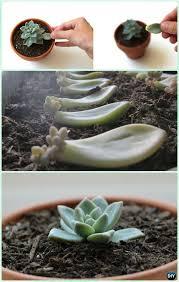 indoor outdoor succulent garden ideas