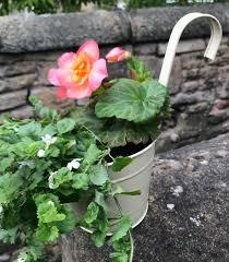 Garden Ready Plant Pots Pre Planted Baskets Online U K Delivery
