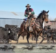 racehorse to ranch horse