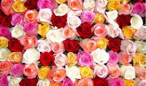 setiap bunga punya makna yang berbeda jangan sampai salah sangka