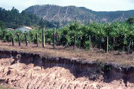 Severe Erosion Along Fenceline And Road In Valle De Angeles Near Tegucigalpa Honduras Stock Photo Download Image Now Istock