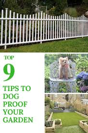 9 Tips To Dog Proof Your Garden 1001 Gardens