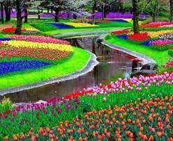 Keukenhof Park, Holland in The Netherlands   Toluna