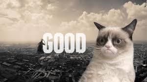 13985 grumpy cat wallpaper 1280 x 720