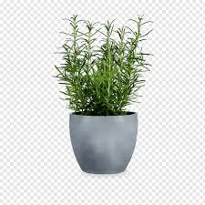 vase houseplant flowerpot gardening