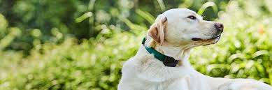 1200fence Lonestar Dogwatch Hidden Fences Aledo Tx