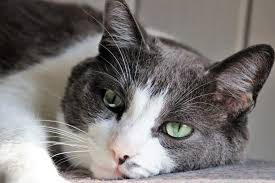 low phosphorus cat food the best cat