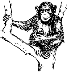 Image result for children's chimp art