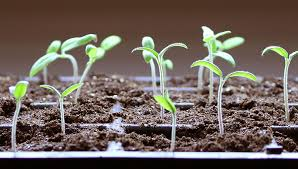 seed starting faqs how to start seeds
