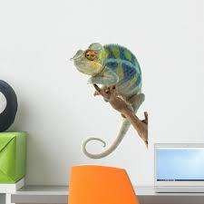 Ambanja Panther Chameleon Wall Decal Wallmonkeys Com