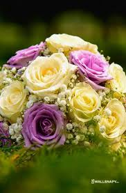 beautiful flowers wallpapers mobile
