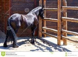 Dark Horse Stays In The Farm With Wooden Fences Stock Image Image Of Beautiful Animal 119177643