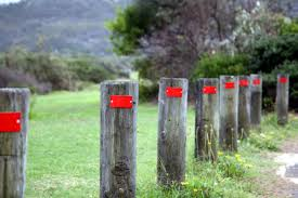 Timber Posts With Red Reflectors By Roadside Stock Photo Download Image Now Istock
