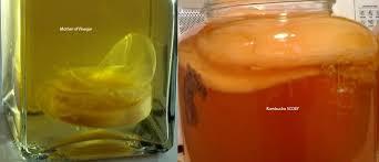 kombucha scobys vs mothers of vinegar