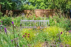 grow a wildflower meadow bird spot