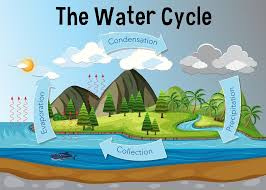 Water Cycle - The Definitive Guide   Biology Dictionary