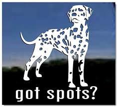 Amazon Com Got Spots Dalmatian Dog Vinyl Window Decal Sticker Kitchen Dining