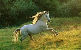 أجمل صور خيول منوعة جميلة جدا