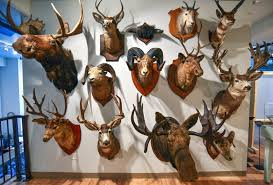 Taxidermy exhibit to open at Kamloops Museum and Archives ...