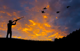 duck silhouette shooting hunting