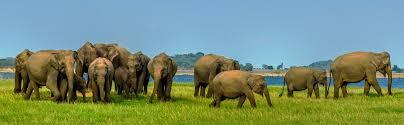 Reiser til Sri Lanka – Bestill billig ferie på Sri Lanka her!