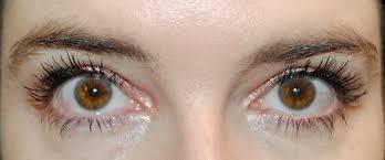 l oreal bambi eye false lash mascara