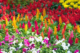 best annuals for late summer color