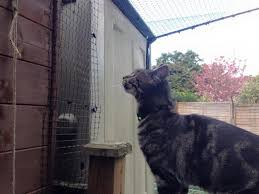 Is It A Good Idea To Cat Proof Your Garden