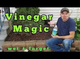 Deck And Fence Cleaners Review Mold Mildew Algae Pressure Washing Pre Wash Youtube